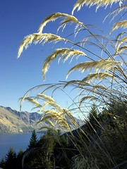 Mountains, lakes, grass and sky (Light Knight) Tags: newzealand mountains lakes naturesfinest grassandsky praiseworthy pentaxk10d goldenphotographer