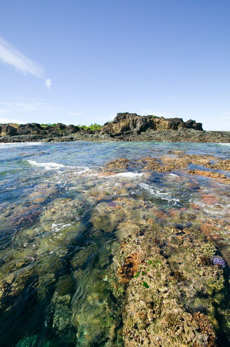 Tavewa Reef