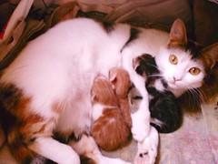 ana (birdysevda) Tags: animal cat kedi hayvan