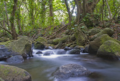 Ke'e Beach Stream (JHallgren) Tags: longexposure trees beach water creek hawaii nikon stream slow kauai tropical kee gardenisle