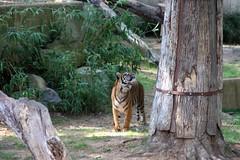 DC Zoo 340 (iamjosh) Tags: zoo dczoo