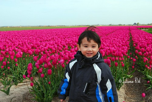 Jason and Tulips