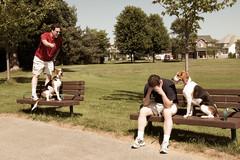 25/52 Hot Summer Disputes (Paguma / Darren) Tags: park dog man male me bench hound clone floyd tamronspaf1750mmf28xrdiiildasphericalif