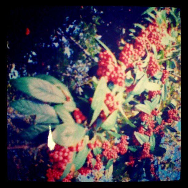 I got some of my Diana mini photos developed!