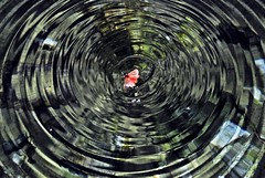 come una farfalla sull'acqua.. (anghello88) Tags: fontana farfalla cerchi sensazioni affogare sullacqua