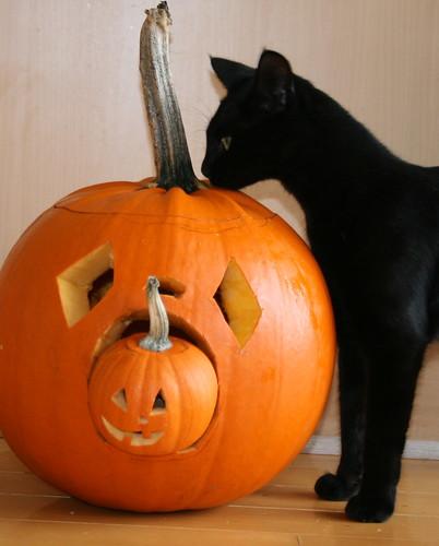 Addison's Pumpkins w/ Black Cat
