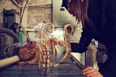 alone at sea (londonscene) Tags: water girl hat basement anchor octopus sailor
