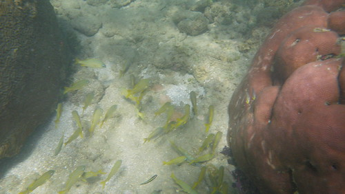 """Snorkling Cauhita National Park, Cauhita, Costa Rica October 31, 2010 • <a style=""""font-size:0.8em;"""" href=""""http://www.flickr.com/photos/28749633@N00/5133885260/"""" target=""""_blank"""">View on Flickr</a>"""