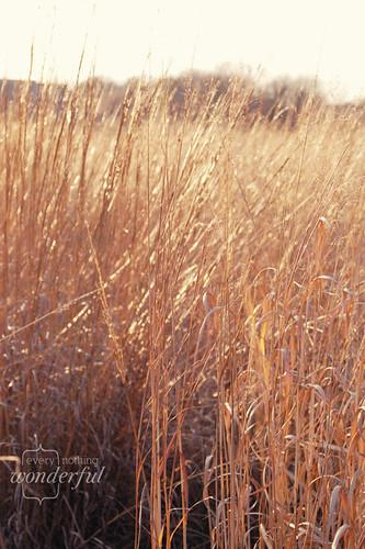 Grasses_Fall