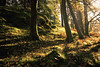 autumn shades (Dennis_F) Tags: uk autumn light england sunlight lake fall zeiss forest landscape licht leaf woods unitedkingdom district sony united herbst natur wide lakedistrict kingdom shades shade fullframe dslr tarn holz landschaft wald blätter lakeland ultra schatten ssm thelakes morgens hows 1635 uwa thelakedistrict weitwinkel ultrawideangle uww a850 163528 sonyalpha sonydslr vollformat zeiss1635 sal1635z cz1635 sony1635 dslra850 sonya850 sonyalpha850 alpha850 sonycz1635