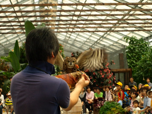 flying owl show