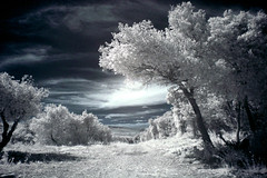 The road to paradise (Lolo_) Tags: road ir paradise best route infrared paradis bourg andéol infrarouge world100f
