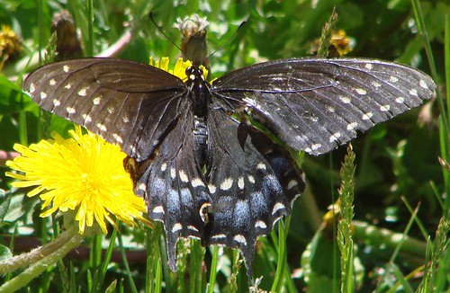 "butterfly • <a style=""font-size:0.8em;"" href=""http://www.flickr.com/photos/10528393@N00/1041249774/"" target=""_blank"">View on Flickr</a>"