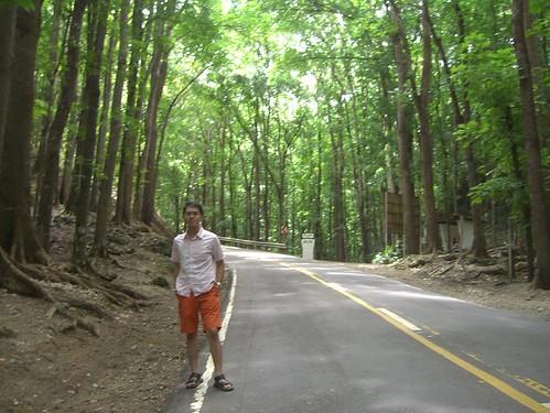 Mahogany Forest-02
