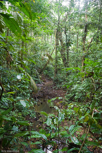 Stream in the Amazon Rainforest
