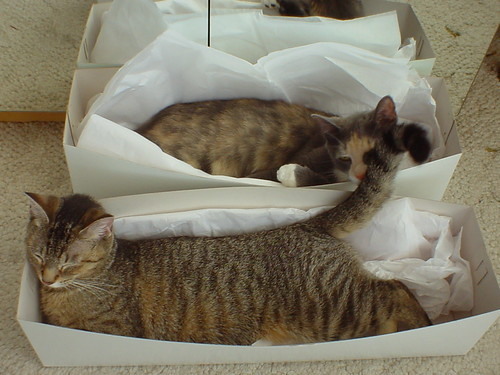 2 gift boxed cats