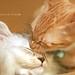 ネコ:kiss
