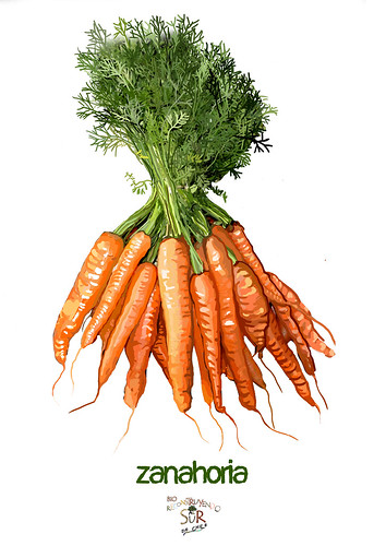 Zanahoria ok