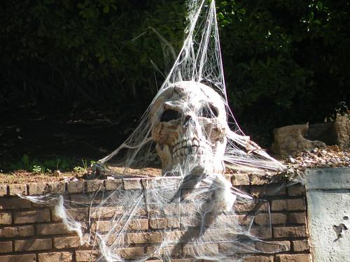 Halloween Guest