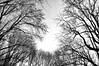 (...storrao...) Tags: trees sky blackandwhite bw portugal nikon noiretblanc céu nb bn porto jardins árvores serralves d90 clareira storrao sofiatorrão nikond90bw