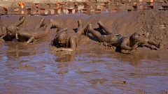 Mudslide (Chris Saulit) Tags: california halloween northerncalifornia mud folsom slide run pit dirty dirt messy 10k sacramento norcal 5k merrell mudrun downanddirty downdirty