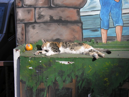 Nyár van a macskáknál is