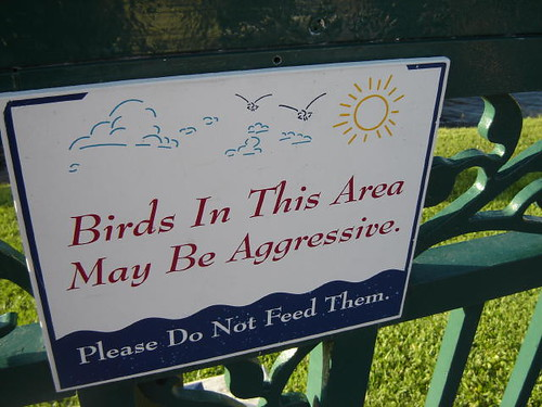 Watch out for birds.