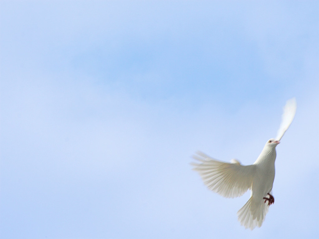 White Dove Against Blue Sky Knowhimonline Tags Fly Powerpoint