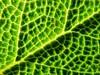 A furry map (michaelab311) Tags: hairy macro green furry map sage explore grün makro landkarte iloveit salbei sauge supershot explore33 mywinners abigfave anawesomeshot impressedbeauty flickrjobdiff diamondclassphotographer flickrdiamond
