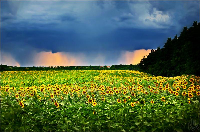 IMAGE: http://farm2.static.flickr.com/1092/951361459_034cfb8222_b.jpg