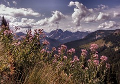 Asters Along the Trail in August - by pictoscribe
