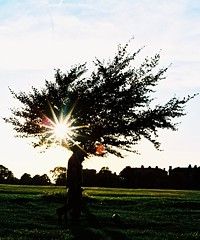 FLASH! Ahh-ahhh... (Trapac) Tags: trees summer england film silhouette downs bristol xpro crossprocessed flash slidefilm flare nikkor50mmf18 agfa clifton starburst nikonf80 thedowns 100iso ctprecisa wmh agfactprecisa bristoldowns explored cliftondown