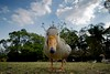 Quack!!!!!!!!! (let's fotografar) Tags: parque ga duck interestingness pato ibirapuera 1020mm