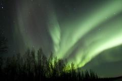 Northern Lights (ErikHalfacre) Tags: nightphotography trees black green alaska night stars hitchhiking northernlights auroraborealis critique hitchiking tds nenana supershot 25faves weatherphotography top20aurora top20aurora20