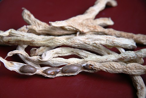 chinese bean seeds