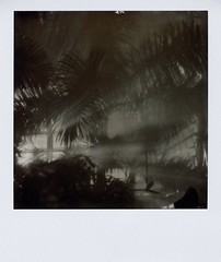 jungle room (a-mills) Tags: film fog analog polaroid dc jungle instant botanicgarden slr680 lightbeams panpola px600