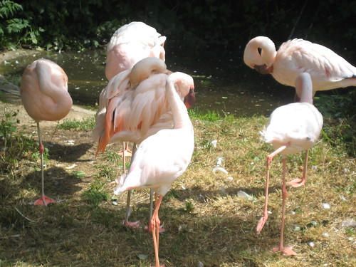 Vogelgetier 2