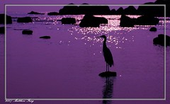 Single............. - by Matthew Fang