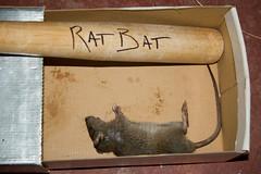 Ratty meets his maker