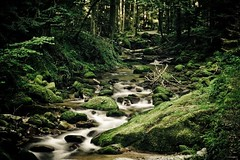 fairy tale forest (u.linder) Tags: wood green water creek forest wasser waterfalls brook badenbaden wald blackforest inthewoods naturesfinest wasserflle greatphotographers allrightsreserved mace2000 ulinder unterwegsmitmatze geroldsau unterwegsmitscott shotbyscott ontourwith matthiasklaiber tour20070804 ulinder|photography