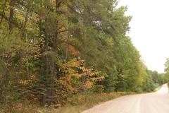 road (WinterFish) Tags: boreal
