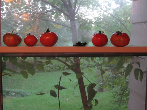 Pretty Tomatoes, All in a Row