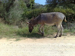 Found a Stray Donkey by the Side of the Road-Halkidiki, Greece: 09/12/2007 (Teddism) Tags: vacation greece thessaloniki tedd themediterraneansea