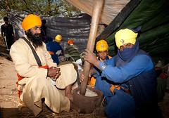 Sukh Nidhan (gurbir singh brar) Tags: india warriors sikhs punjab cannabis brar sukha gurbir nihangs cannabisindica holamohalla thandai shardai gurbirsinghbrar gurbirsingh sukhnidhan sukhprasad shardayee