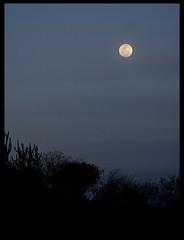 Azul profundo... (Rafa Barajas) Tags: cactus azul mexico atardecer paisaje luna guanajuato oscuridad ltytr1