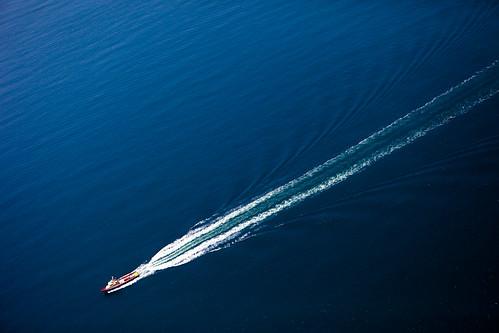 Gliding Through the Ocean Essay