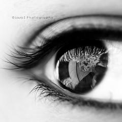 ([L] di .zuma) Tags: macro 100mm mio 28 occhio riflesso ciglia nitidezza