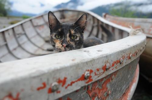 gatito, lanchas, Peulla, Chile