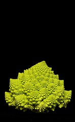 romanesco (vernon.hyde) Tags: romanesco brassicaoleracea romanescocauliflower romanescobroccoli romancauliflower
