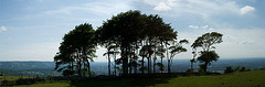 Cleeve Hill Tree View 1